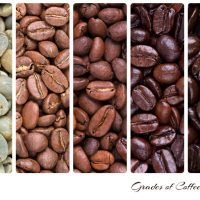 What Is The Difference Between Espresso Beans and Coffee Beans? (The  Foundation Of Your Brew)