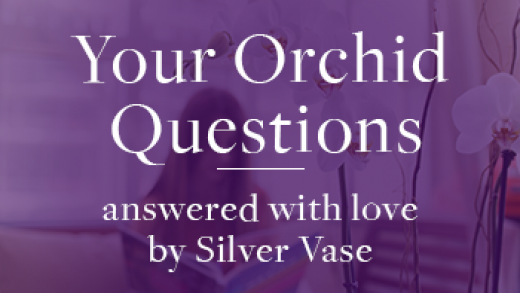 Espresso Care — Your Orchid Questions
