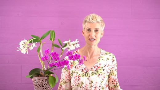 Espresso Orchid Care: The Complete Guide - Orchid Bliss